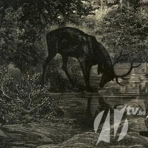 jelen u vodi